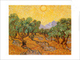 Sun Over Olive Grove by Vincent van Gogh